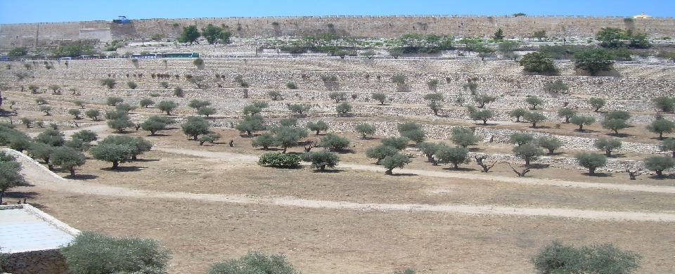 Jerusalem, The Mount of olives